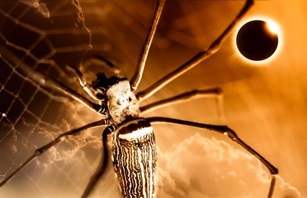 Eclissi di Sole: che effetto fa sugli animali?