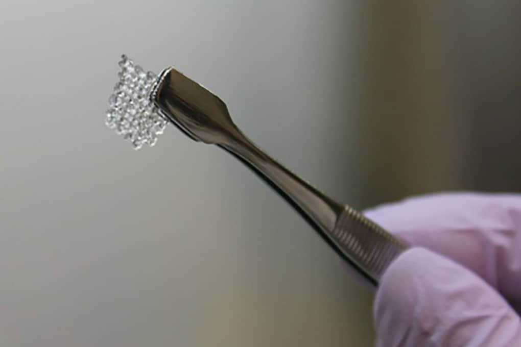 Un ovaio stampato in 3D ha permesso una gravidanza