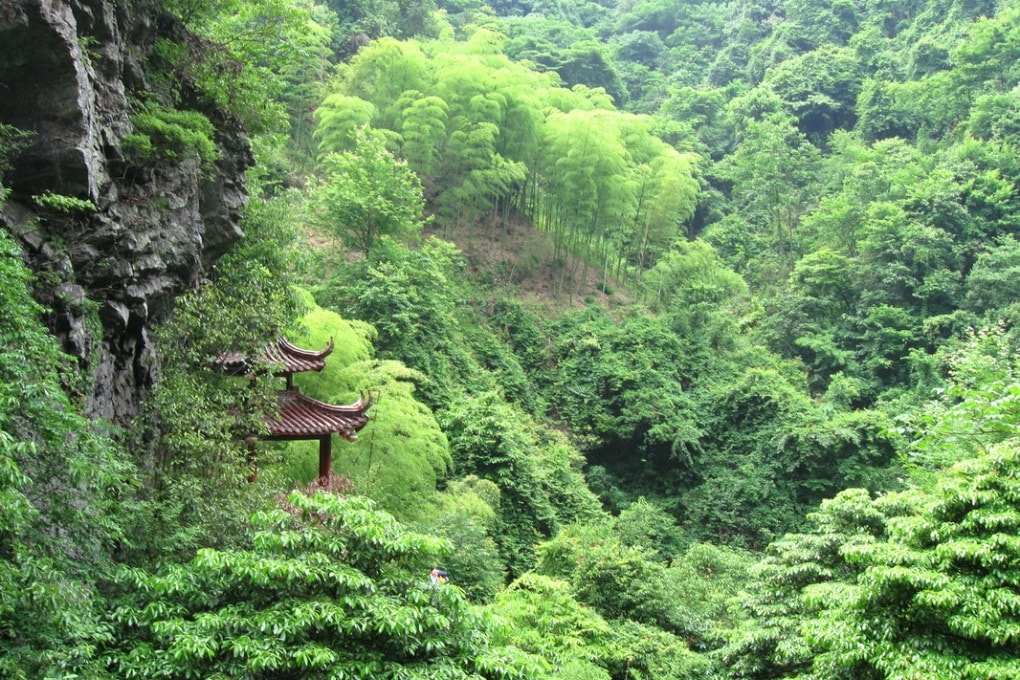 La Cina ha ricoperto di foreste un'area grande più dell'Italia