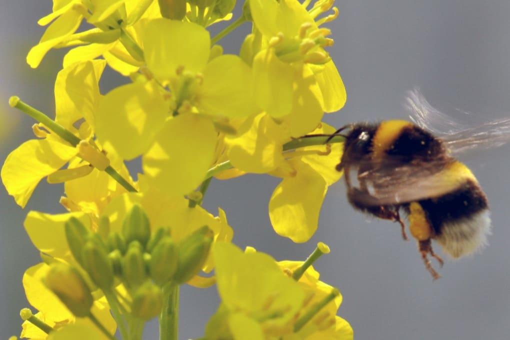 Come gli impollinatori influiscono sull'evoluzione delle piante