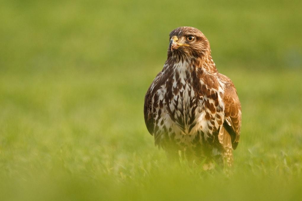 Massacro nei cieli: tra caccia e bracconaggio molti uccelli europei potrebbero scomparire