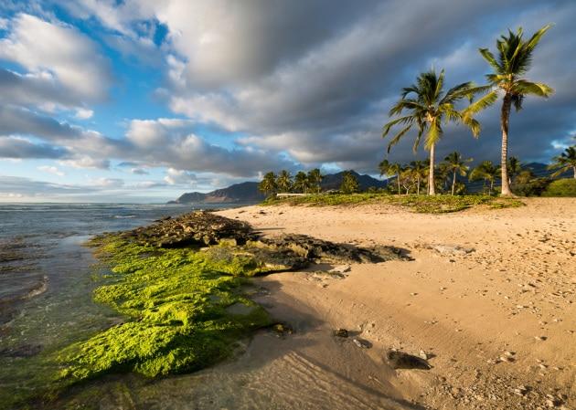 Un nuovo virus gigante nelle acque delle Hawaii