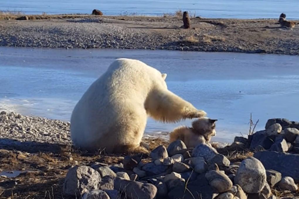 L'orso polare e il cane, la scienza di un video virale