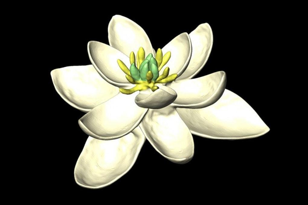 Il primo fiore apparso sulla Terra