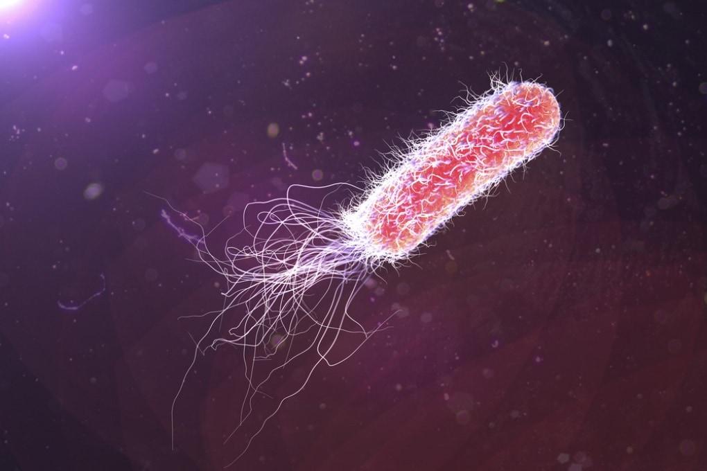 I batteri possono trasmettere ricordi alle generazioni successive