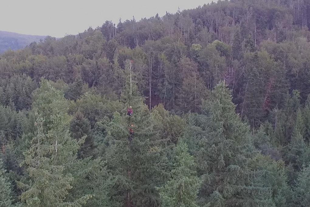 Tree King: l'albero più alto d'Italia sfiora i 63 metri