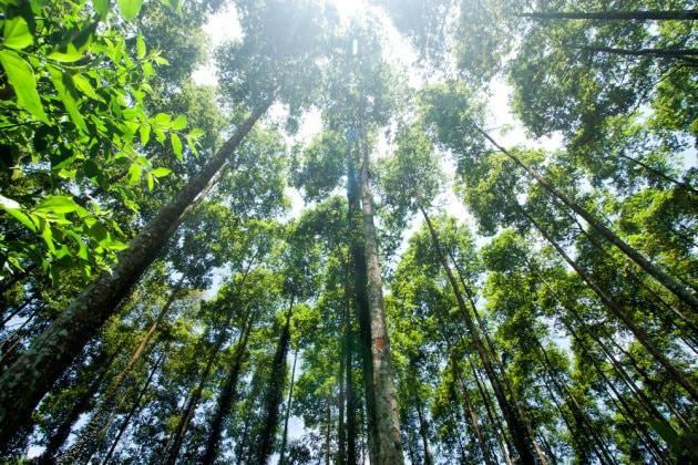Foreste tropicali: da serbatoi a emettitori di CO2
