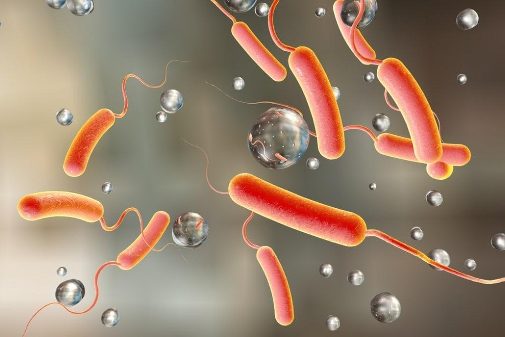 8 cose da sapere sul colera