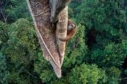-timlaman_wildlifephotographeroftheyear_grandtitlewinner