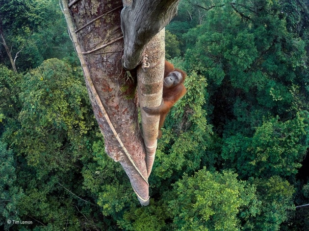 I vincitori del Wildlife Photographer of the Year 2016