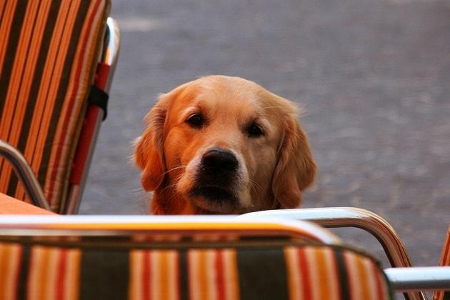 Il tuo cane si ricorda quello che fai