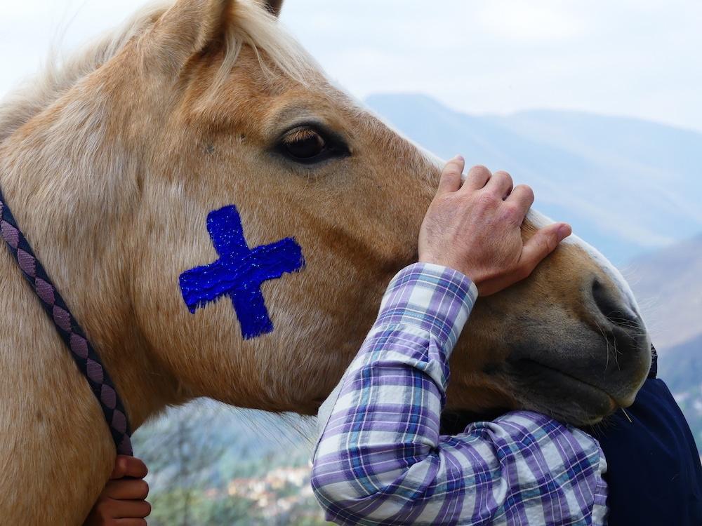 Stai sereno i cavalli si riconoscono allo specchio - Cavalli allo specchio ...