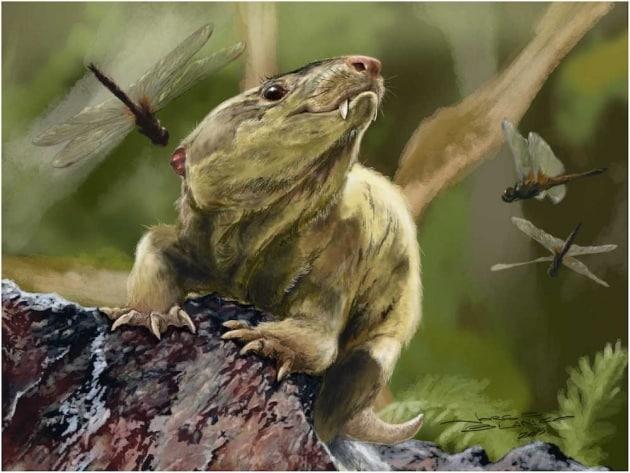 Il rettile brasiliano bisnonno dei mammiferi