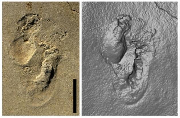 Le impronte fossili che potrebbero cambiare la storia dell'evoluzione umana