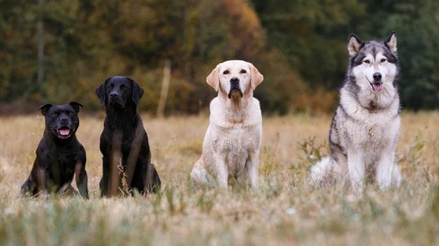 L'albero genealogico più completo delle razze canine