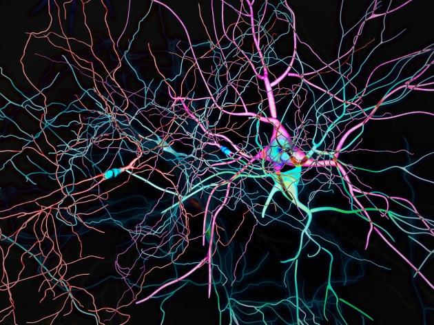 Neuroni da cellule staminali efficaci contro il Parkinson
