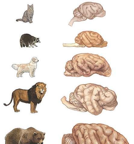 I Cani Hanno Più Neuroni Dei Gatti Ma Non è Detto Che Siano Più