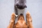 dogcat