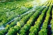 irrigazioneagricoltura