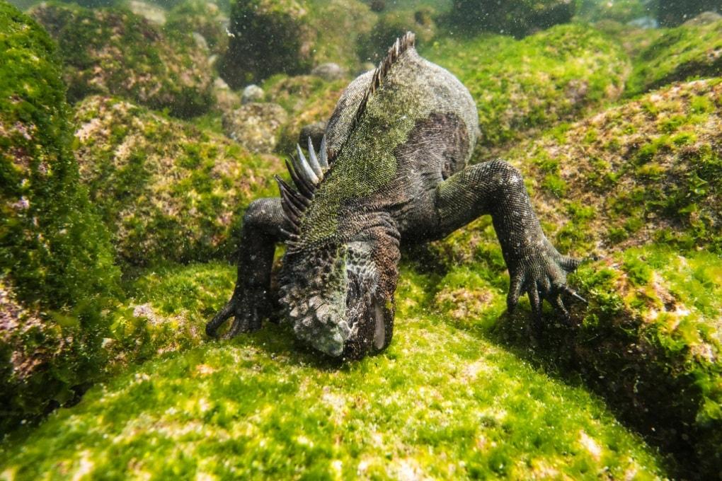 Così le Galápagos divennero scrigno di biodiversità