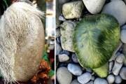 pietra-canuta