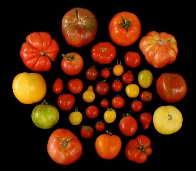 Pomodori di nuovo saporiti