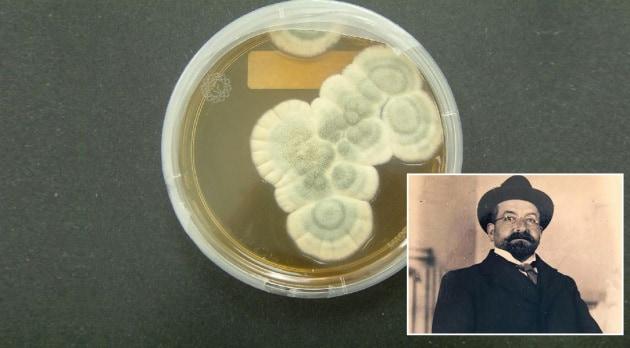 Tiberio, l'italiano che scoprì la penicillina prima di Fleming