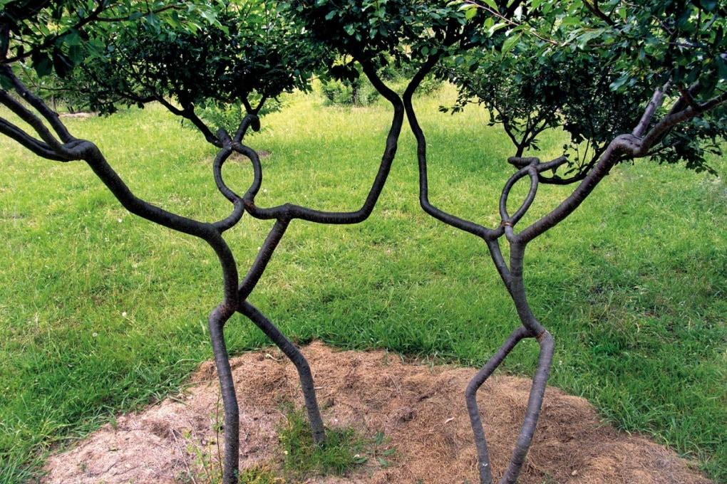 Che cos'è l'arbo-scultura?