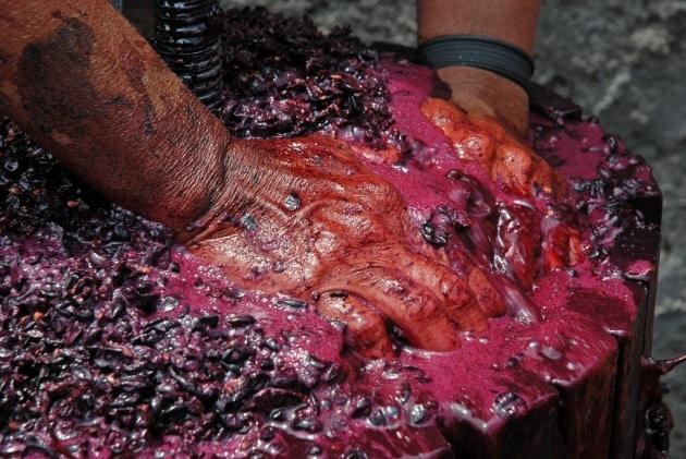 13 curiosità in un bicchiere di vino