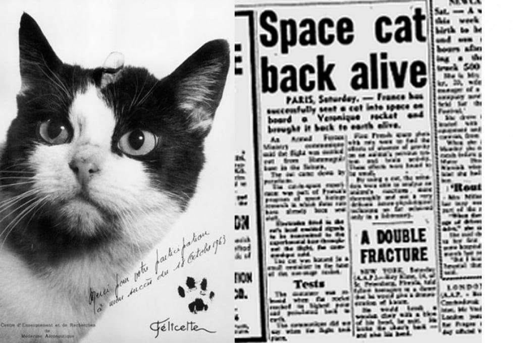 La storia dimenticata di Félicette, il primo gatto nello Spazio