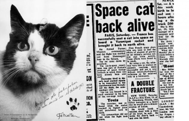 felicette-spacecat_1024x1024