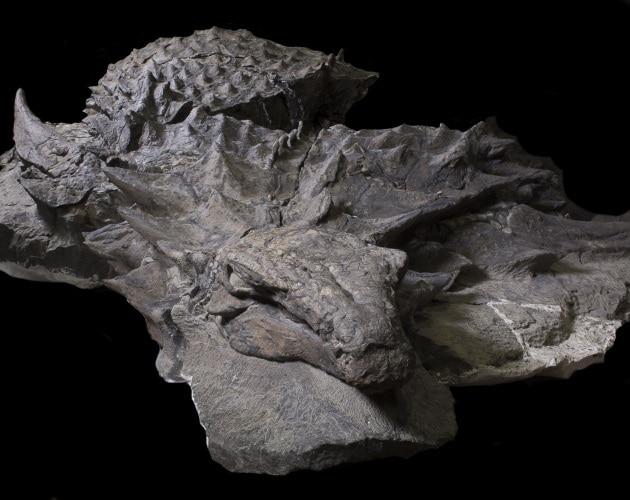 Dinosauri: il fossile meglio conservato di sempre