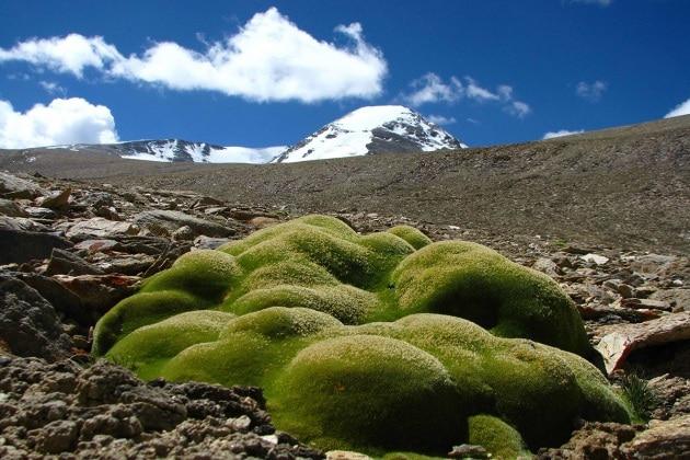 Nuovo record di altitudine per le piante vascolari