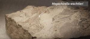 rettili, lucertole, serpenti, palontologia, Megachirella wachtleri, MUSE
