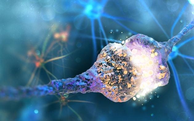 Nuove cellule nervose anche nei cervelli adulti