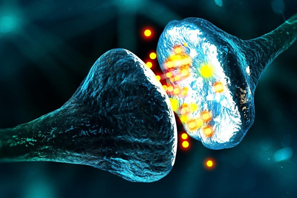Che cosa sono le sinapsi?