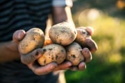 Le patate donarono all'Europa due secoli di pace