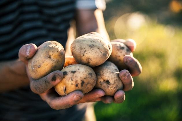 Le patate donarono all'Europa due secoli di pace