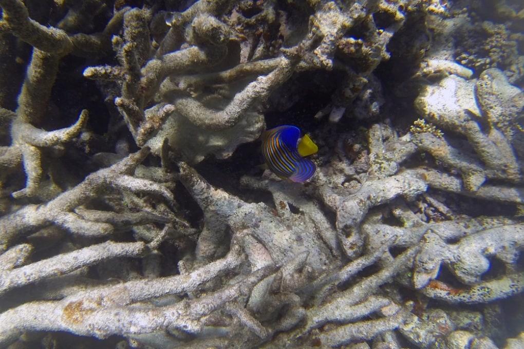 La Grande Barriera Corallina sta peggio del previsto