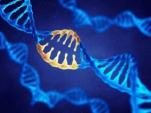 CRISPR, Cas13, forbici molecolari, editing genetico, DNA, RNA, mutazioni genetiche, tumori