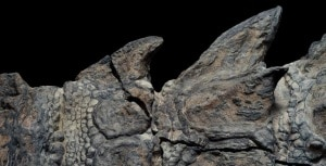 fossili, dinosauri, cretaceo, Borealopelta markmitchelli