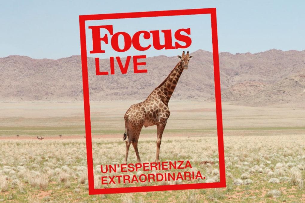 Focus Live: il programma e le aree tematiche