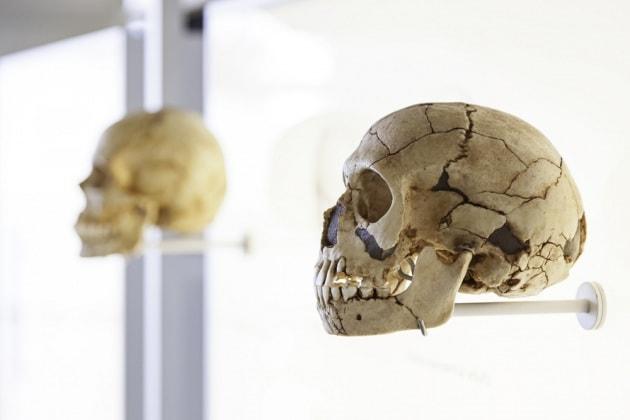 Che cosa possiamo scoprire dai denti preistorici