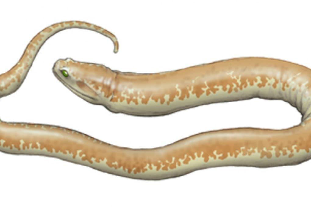 Come i pesci sono diventati serpenti