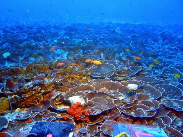 Hawaii: un'esplosione di vita a profondità poco esplorate