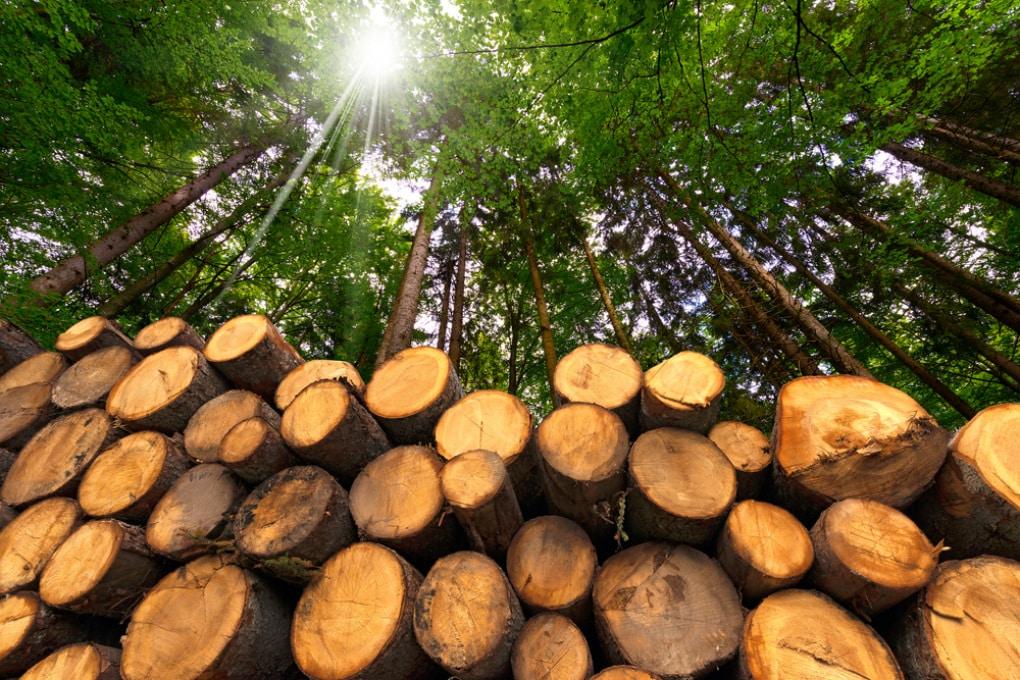 Perché la combustione del legno non è a emissioni zero