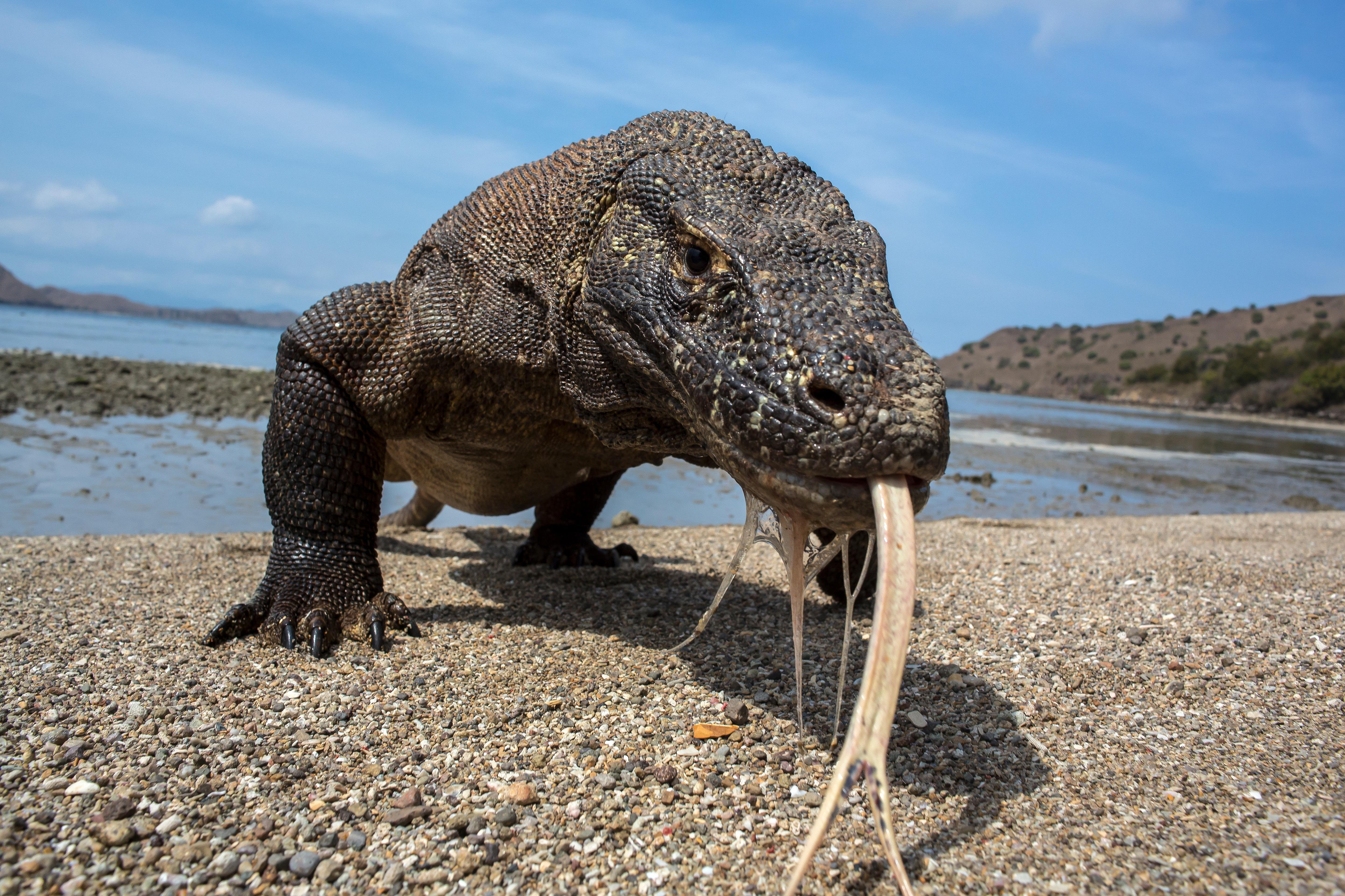 Google: un Doodle per celbrare il Parco nazionale di Komodo