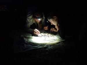 insetti, animali, insetti notturni, inquinamento luminoso, luce artificiale