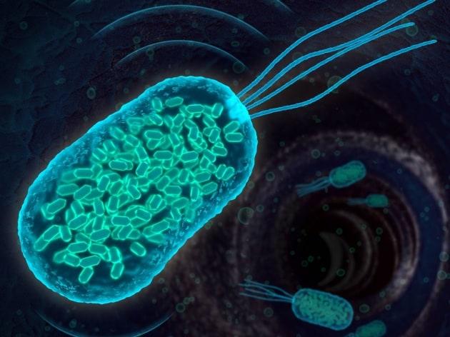 1-gv-bacteria_low