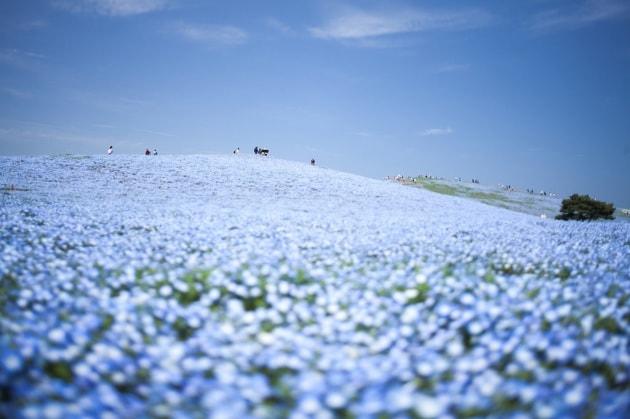 Giappone, il parco si fonde con il cielo
